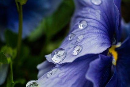 paul-wellner-bou-392618-unsplash rain drops