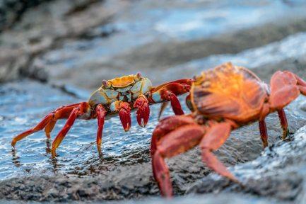 crabs 2